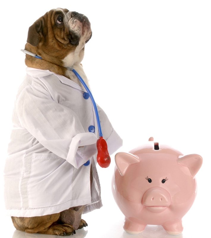 dog_and_piggy_bank.jpg